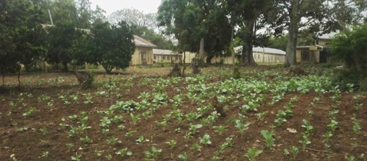 Sustainable Agriculture for Visually Impaired Students